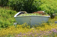 Garden inspection, July 10, Tickle Cove, NL